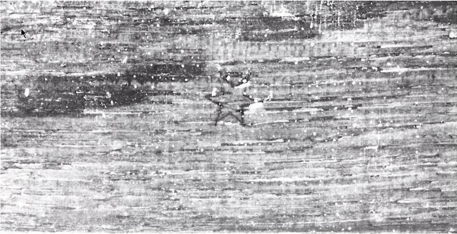Fig. 14 - Merkteken van de Meester met de ster (cat. nr. 236) (foto: J. Wadum, Kopenhagen).