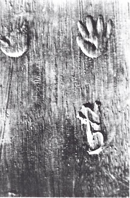 Fig. 9. Merk van Guilliam Aertssen (?) met de guts aangebracht, Kopenhagen, Kasteel Rosenborg (foto: J. Wadum, Kopenhagen).